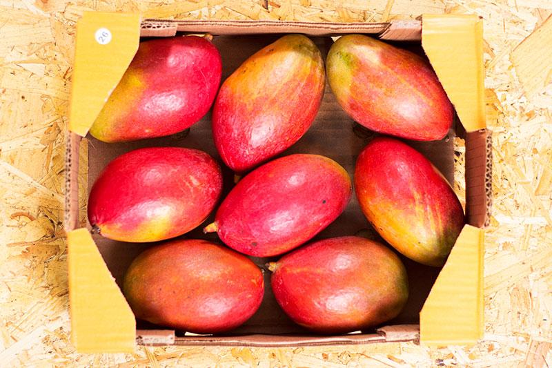 Box of ripe mangos