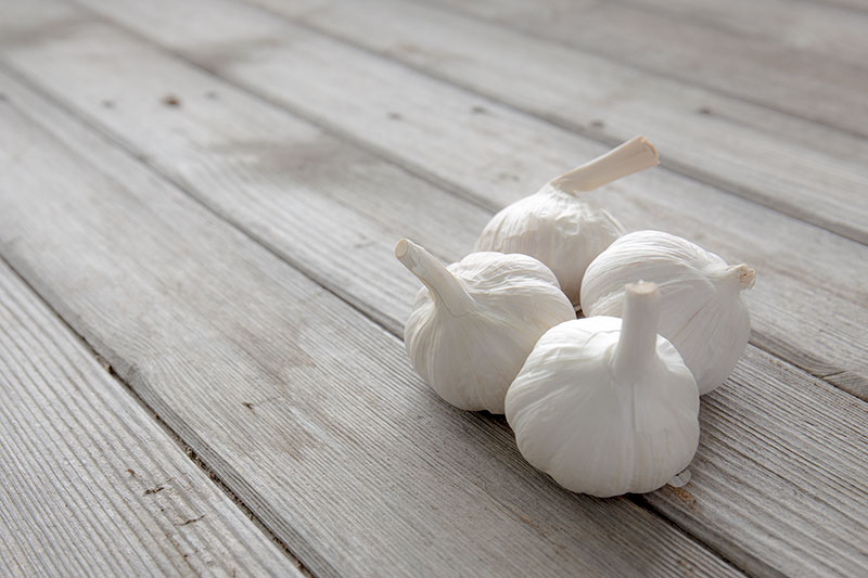 10 garlic facts every cook should know! Four bulbs of garlic sitting on aged wood