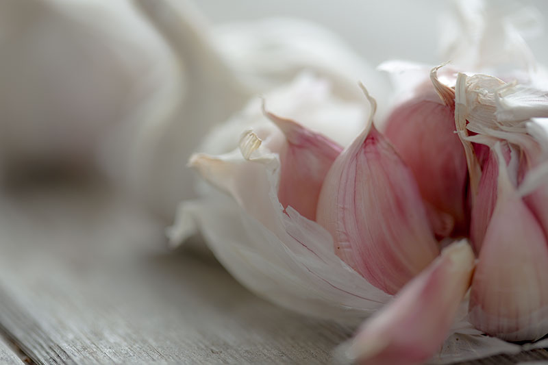 10 garlic facts every cook should know! Cloves of garlic falling out of a bulb with soft natural lighting