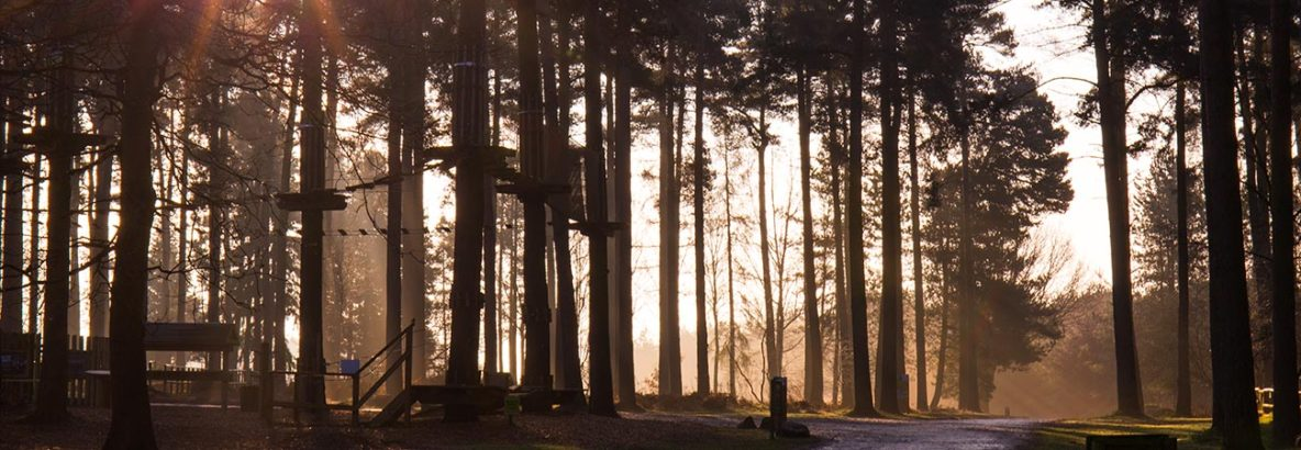 Cannock Chase Sunrise