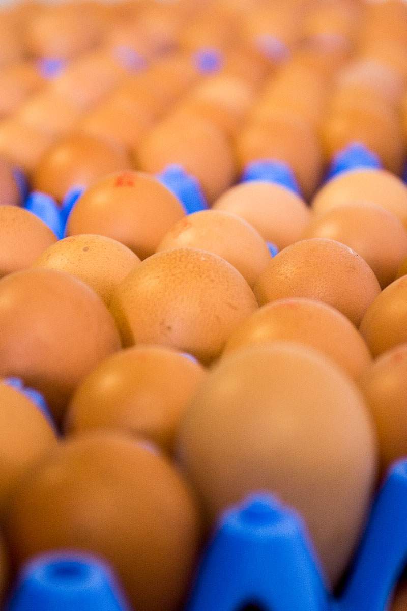 21 things about eggs lots of organic eggs