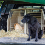 Open Farm Sunday gun dogs