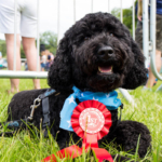 Open Farm Sunday Best Male Dog Bernard with Rosette