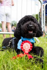 Open Farm Sunday Best Male Dog Bernard with Rosette